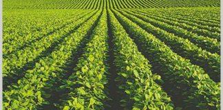 Cultivos de soja