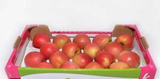 Cajones de cartón para fruta