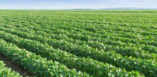 Advierten sobre la falta de diversidad de los sistemas agrícolas nacionales, dominados por monocultivos.